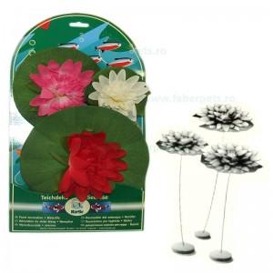 Plante acvariu nufar 10, 14, 20 cm