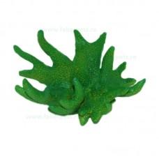 Ornament coral verde 10x7 cm